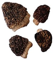 Morel mushrooms enjoy the nutrients added by wood ash mixed into soil.