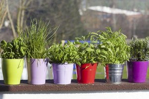 Herbs and spices in containers with drainage holes can be moved around the garden.