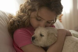 Hold your puppy to socialize and bond with him.