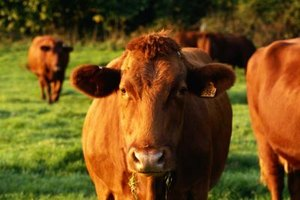 Cattle futures are among the potential commodities to invest in.