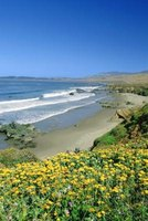 You can enjoy natural and man-made wonders at San Simeon State Park.