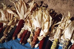 How to Kill the Bugs in Dried Field Corn