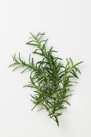 Rosemary does not grow well from seeds, so cuttings are a good method for propagation.