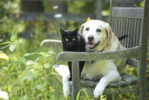 Cat and dog sitting together on bench