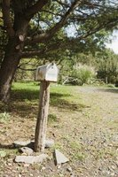 Keeping the grass short around your mailbox discourages earwig entry.