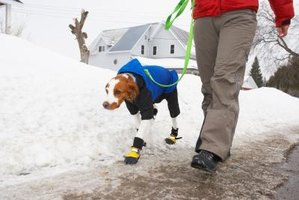 Boots can keep ice melt off your dog's paws.