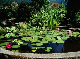 You can create a miniature version of an outdoor pond.