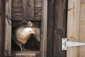Ventilating a henhouse is important for the chickens' health.