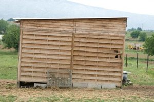 Outdoor sheds will attract pests even more easily than homes.