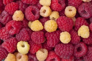 Make the most of the short raspberry season by trying different colors.
