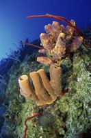 Sea sponges can live in any aquatic ecosystem and have an unusual cellular structure.