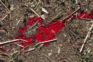 Animal blood on the ground in a field.
