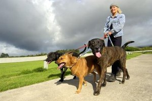 Walking multiple dogs at once is one way to achieve effeciency in a dog walking business.