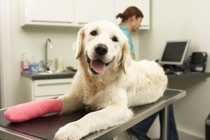 Dog with cast on leg in veterinary office