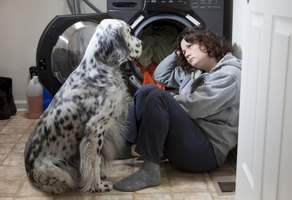 Other household pets may also mourn their peer's loss, and will need attention and monitoring.