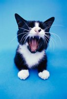 Your cat's teeth can do significant damage.
