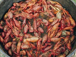 Crayfish are a low-fat, high-protein treat.