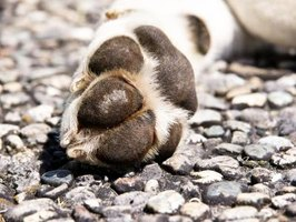 Close-up of dog paw on street.