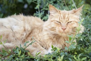 Older cats naturally slow down as they age.