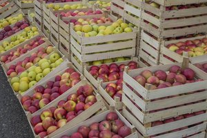 Boxes of ripened apples ready to be sold