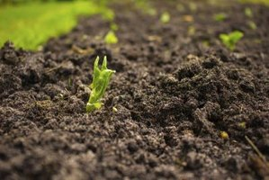 The difference between organic inorganic soil ehow for Mineral soil definition
