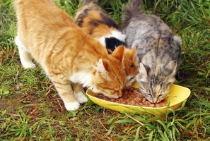 Cats eating canned salmon from small dish.