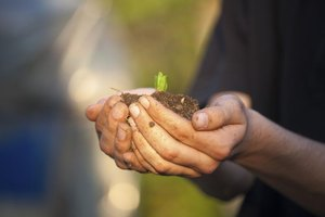 A man is holding soil and a sprouted plant in his hands.
