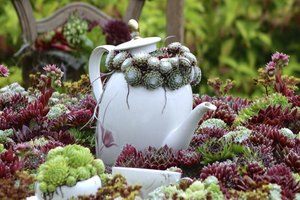 Add whimsy to your garden with hens and chicks planted in a coffee pot.