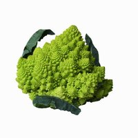Romanesco broccoli is an attractive addition to the vegetable garden.