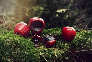 Poisoned apples are a Snow White witch's crafty weapon.