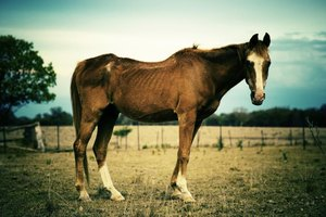 The body score is an objective assessment of horse weight regardless of breed.