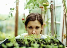 A woman in a greenhouse looking at her plants.