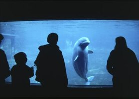 Employment as part of an aquarium maintenance team may require higihly specialized education and training.