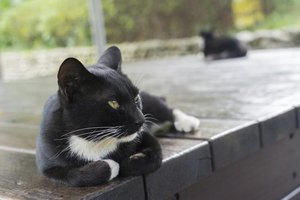 Tuxedo cat lying on wooden porch