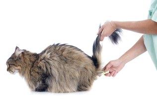 himalayan cat rescue ohio