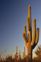 A cactus is a simple subject for desert arts and crafts for preschoolers.