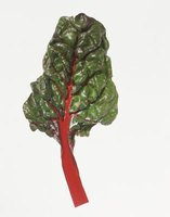 Swiss chard and beet are technically the same species and share the same pests.