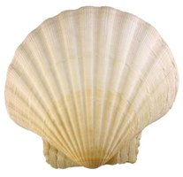 Add large seashells to a bikini top to make part of a costume.