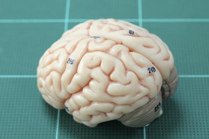 A model of the human brain on a grid.