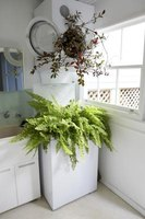 A Boston fern in a large indoor planter box.