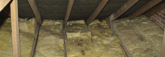 How To Get Rid Of Mold In The Attic Ehow