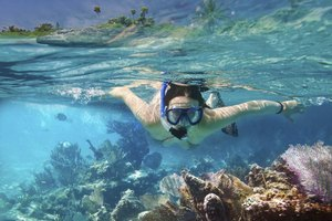 Clear water and a shallow reef are ideal conditions for snorkeling.