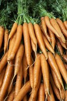 Experiment with ways to cook fresh carrots.