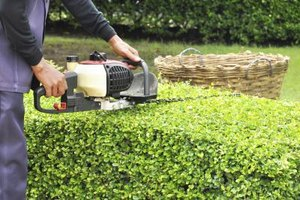 A gardener trims low hedges.