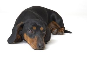 Paralysis sometimes signifies antifreeze toxicity in dogs.
