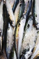Salted mackerel is flash-frozen after salting.