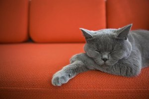 Grey cat sleeping on red sofa.