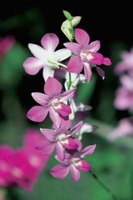 Some orchids tolerate full sun, but most need partial shade.