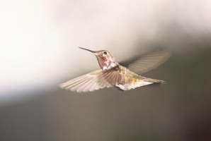 Nourish hummingbirds with a homemade feeder and nectar.