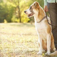 Proper equipment, including the right leash, ensures your relaxing walk delivers.
